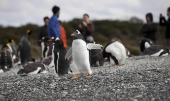 Walk with Penguins!